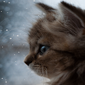 Kitty and Snow Live Wallpapers icon
