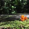 Orange Jelly