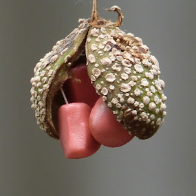 Seeds by Vaibhav Shende - Nature Up Close Other Natural Objects ( seed,  )