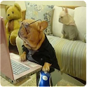 Fotos de animais engraçados icon