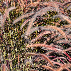 grass by Jigs Crisostomo - Nature Up Close Leaves & Grasses ( #nature, #outdoor, #grass )