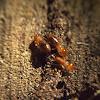 Termites & termite mound