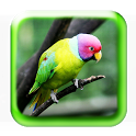 Bird Sounds -3D- icon