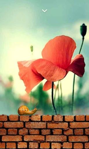 微距花朵动态壁纸