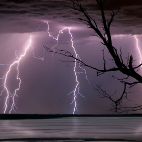 branches everywhere by Craig Eccles - News & Events Weather & Storms ( thunder, lightning strike, lightning, tree, thunder storm, lake, storm )