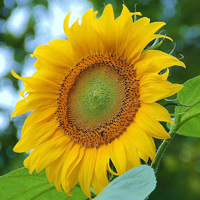 Garden Flower by Dominick Darrigo - Flowers Single Flower