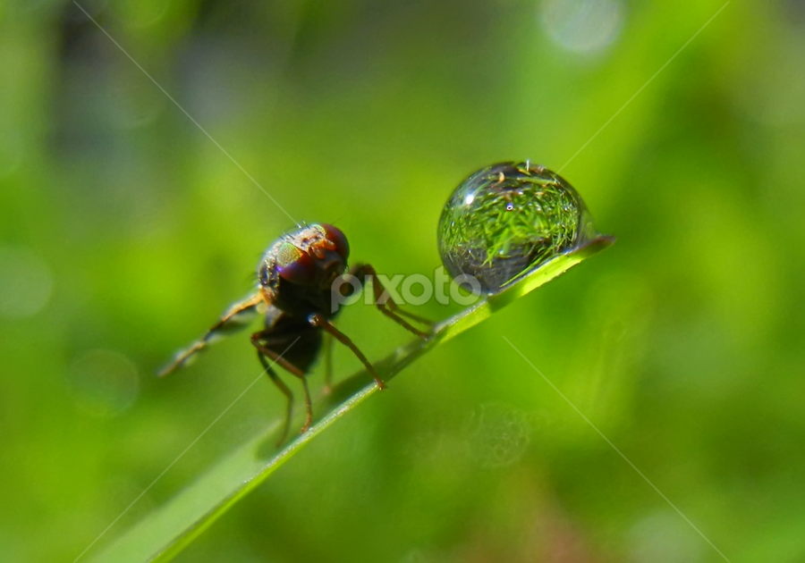 by Lalu Agus Suhardiman - Nature Up Close Natural Waterdrops