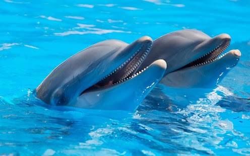 海豚動態壁紙