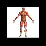 Human Body - Anatomy