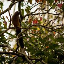 Birds of Indonesia, Malaysia, and Singapore