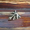 Jersey Tiger Moth