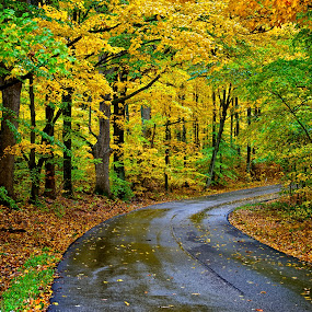 Union Valley Road by Hugh Hazelrigg - Landscapes Forests ( nature, autumn, colors, fall, pixoto, landscape, outside, path,  )
