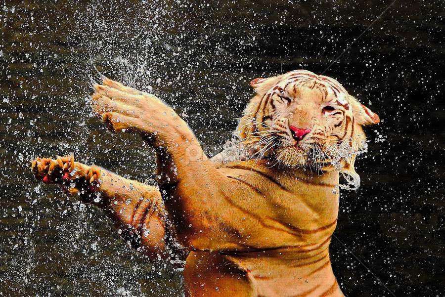 Dangerous Beauty by DODY KUSUMA  - Animals Lions, Tigers & Big Cats ( selective color, pwc,  )