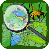 Find Hidden Stuff Game: Insect