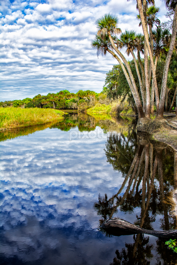 Reflections on Myakka River by Joe Saladino - Landscapes Waterscapes ( reflection, park, waterscape, florida, river,  )