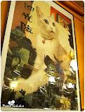 小貓花園咖啡