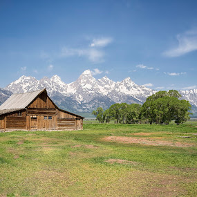 Moulton Barn by Stacy White - Landscapes Mountains & Hills ( mountains, barn, moulton, mormon row, tetons )