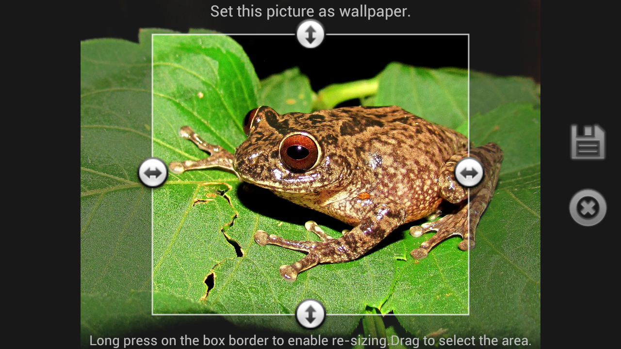Frog Find - Android Apps on Google Play
