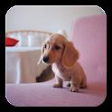 Q Dog Fondo animado icon
