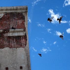 Action! by Paul Stanley - City,  Street & Park  Street Scenes ( hollywood, birds, bluesky )