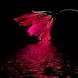 Glowing Flower Live Wallpaper