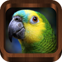 Bird Calls , Songs and Sounds icon